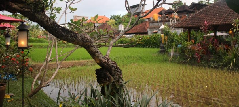 Ubud-Part 1